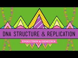 Binary Option Tutorials - Binary Book Video Course DNA Structure and Replication: Cras